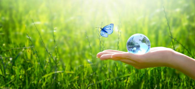Butterfly and hand in nature